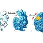 آنزیم چیست